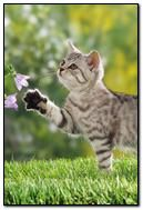 Nature Kitten
