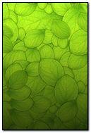 Leaf Gradient
