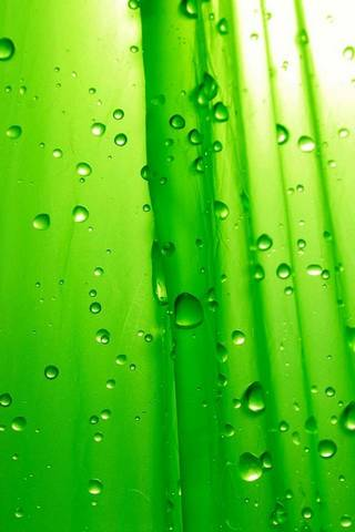 Green Drops Hd