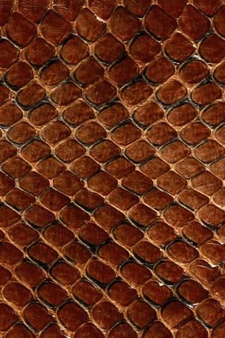 Dark Snake Skin