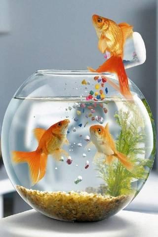 سمكة مضحكة