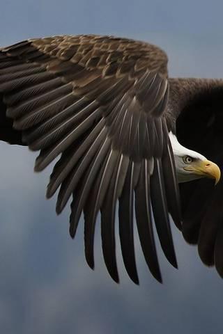 Melonjak Eagle
