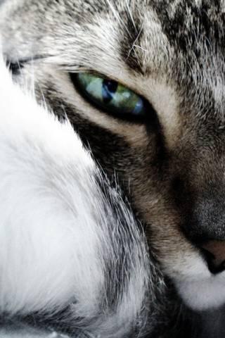 Cat Mata 2