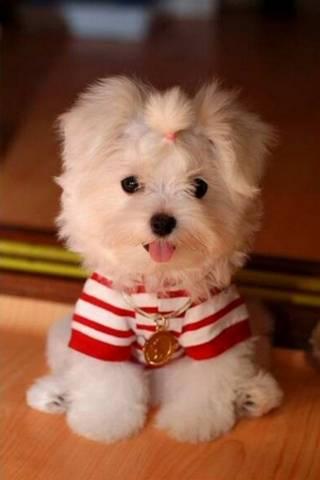 Con chó dễ thương