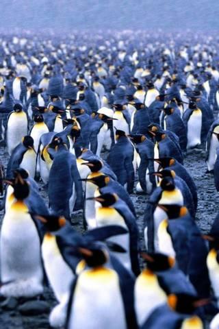 Penguin Arktik