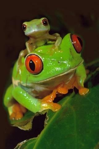 Gia đình ếch