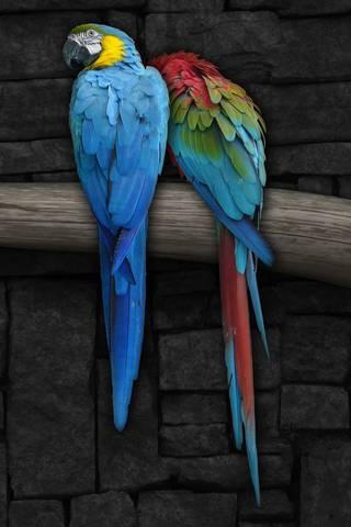 Любить папуг
