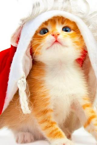 Kitten Holiday