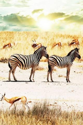 Zebra N Deer