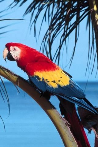 エキゾチックな鳥