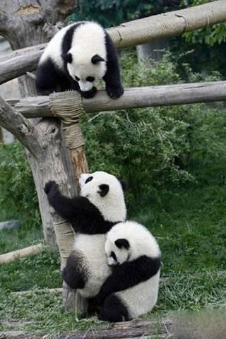 Panda lebih kecil