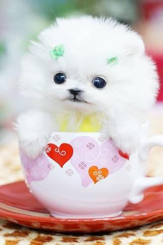 在杯子的小狗