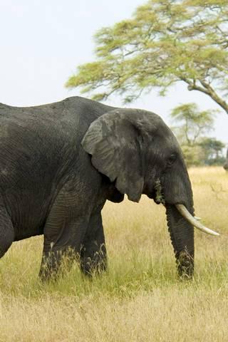 Elephant Mac