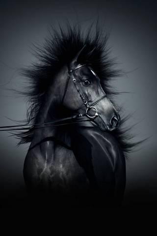 Dark Horse Ipho