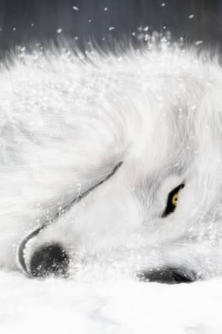 Beyaz kurt