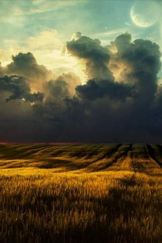 DryGras* Field
