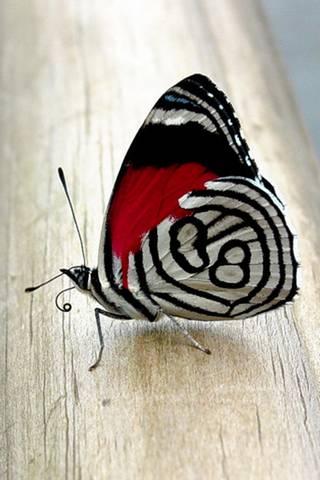 Butterfly V1