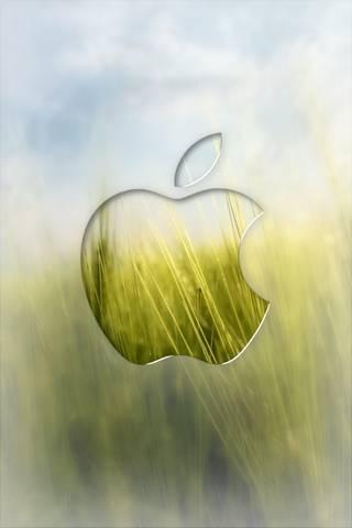 Поле Яблуко