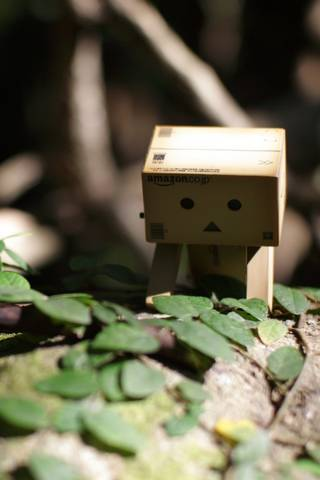 Little Danbo