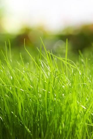 Iphone Grass