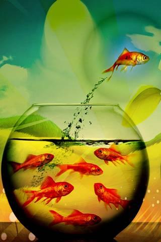 五颜六色的鱼