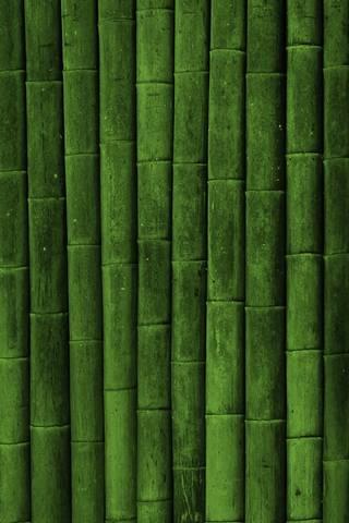 الخيزران الأخضر