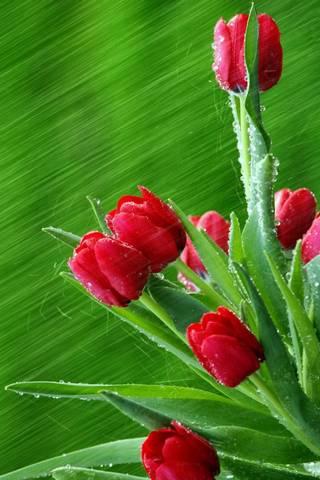 Pąki kwiatowe
