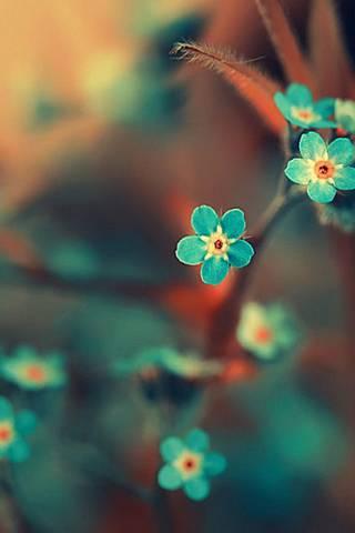 Блакитна квітка