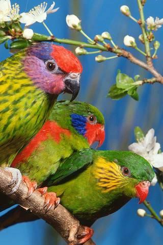 Zielone ptaki.