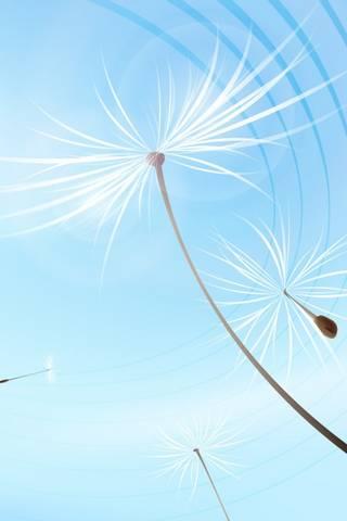 พัด Dandelions