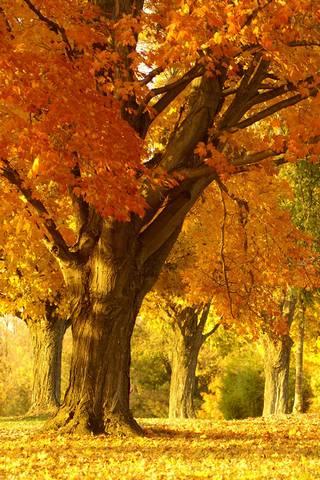 गोल्डन शरद ऋतूतील वृक्ष