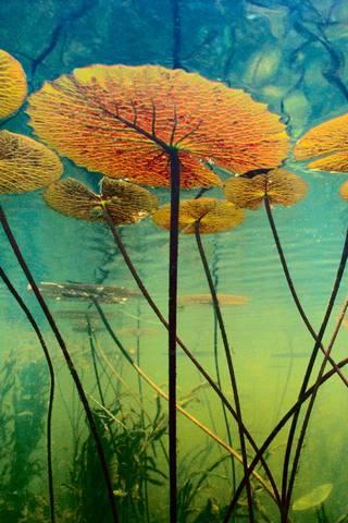 पाण्याखाली