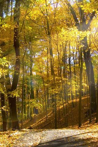 Sunny Autumn Fo