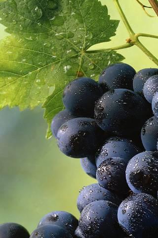Чорний виноград