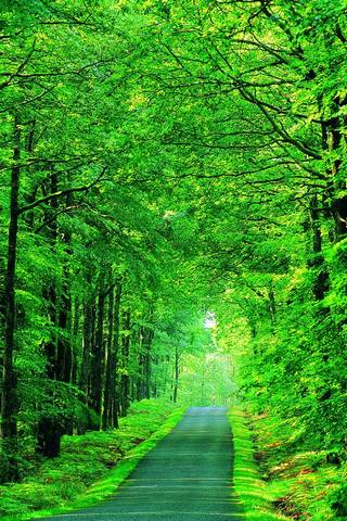 Grüne Weise