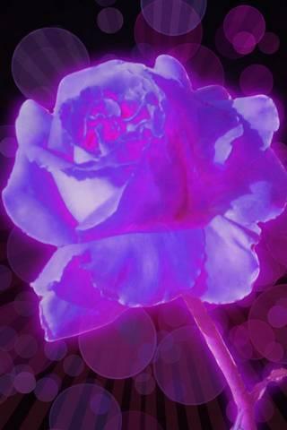 Рожеве сяйво