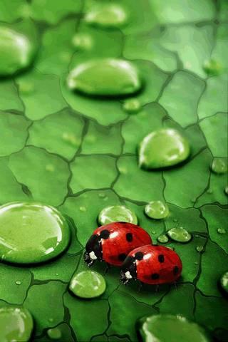 Bugs Couple