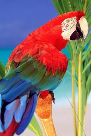 Burung Beo Tropis