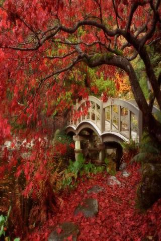 Japonya Bahçesi