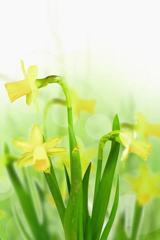 Квітка 2