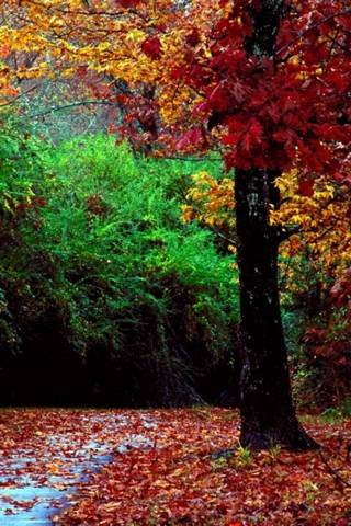 Parque de otoño