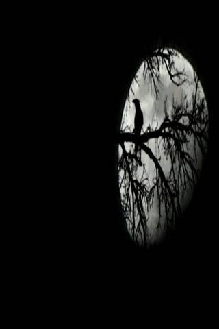 Bird N Moon