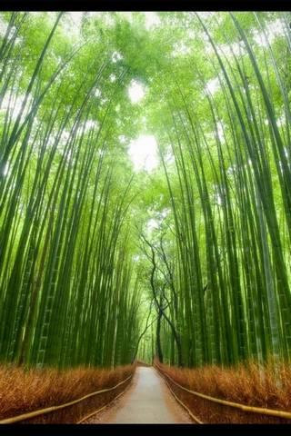 Tokyo Forest