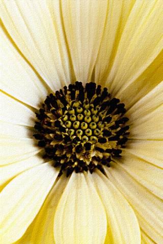 Bunga 3