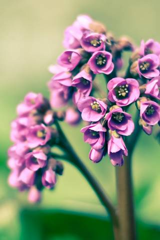 Spring Remixed