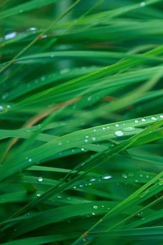 Gras* Blades