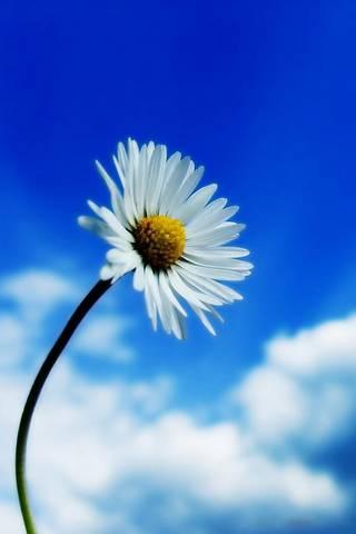 Flor branca