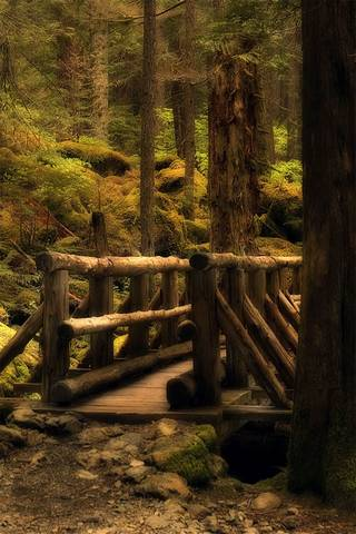 Forest Bridge