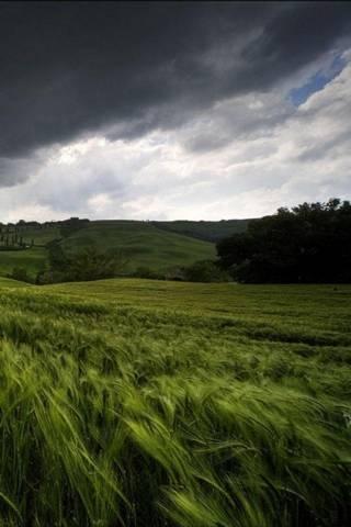 Gras* Nature