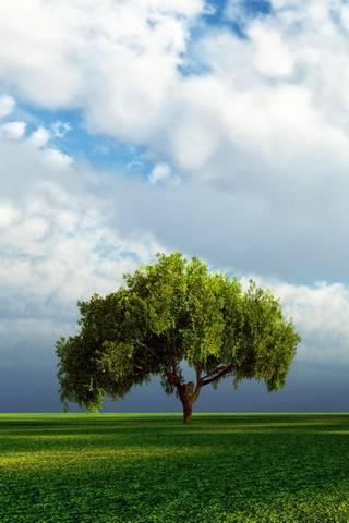 혼자 나무